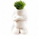 ראש דשא בעציץ לבן